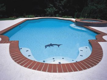 pool with dolphin